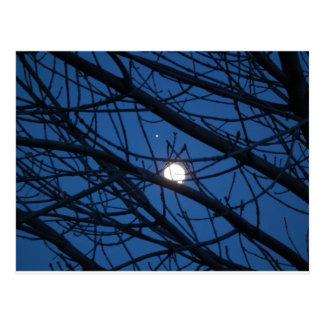 Luna en un árbol postal