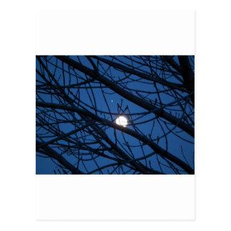 Luna en un árbol tarjetas postales