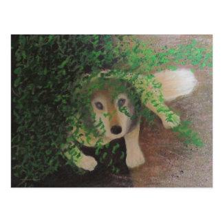 Luna Husky Wolf Dog Blend Postcard