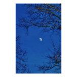 Luna Llena azul con los árboles Papeleria De Diseño