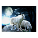 Luna llena del lobo grande poster