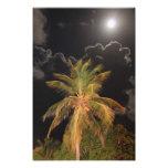 Luna Llena sobre una palma tropical Foto