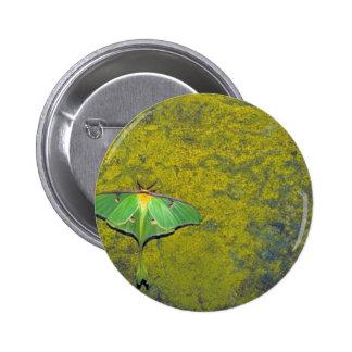 Luna moth buttons
