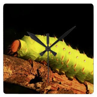 Luna Moth Caterpillar Square Wallclock