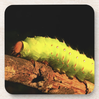 Luna Moth Caterpillar Drink Coaster