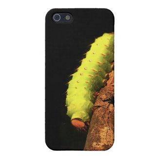 Luna Moth Caterpillar iPhone SE/5/5s Cover