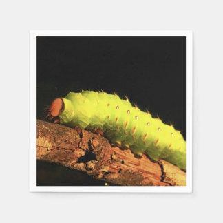 Luna Moth Caterpillar Standard Cocktail Napkin