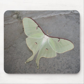 Luna moth gray background-mousepad mouse pad