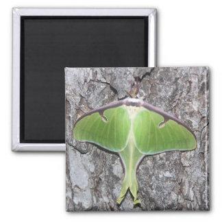Luna Moth Magnet Fridge Magnets