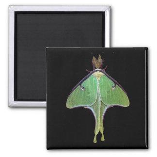 Luna Moth Refrigerator Magnet