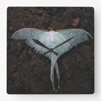 luna moth nature butterfly fairy fantasy dream square wallclocks