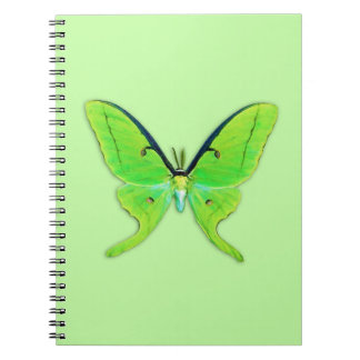 Luna moth on a pale green background notebooks