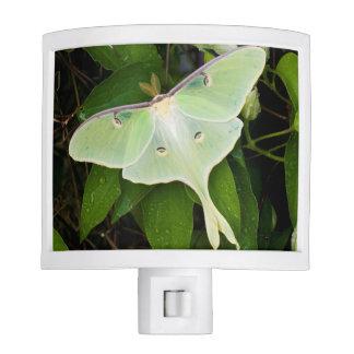 Luna Moth on Carnaby Clematis Nite Lite
