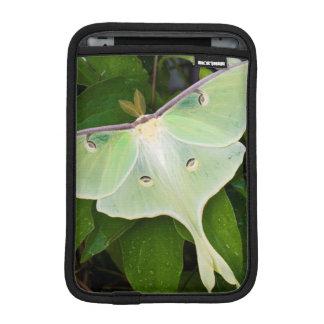 Luna Moth on Carnaby Clematis iPad Mini Sleeve