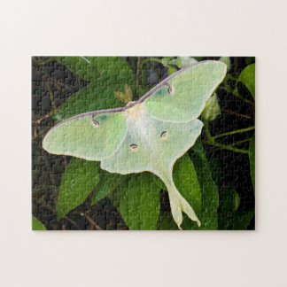 Luna Moth on Carnaby Clematis Jigsaw Puzzle