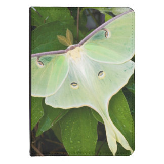 Luna Moth on Carnaby Clematis Kindle 4 Cover