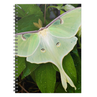Luna Moth on Carnaby Clematis Spiral Notebook