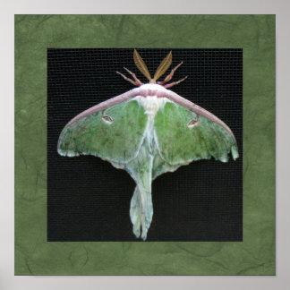 Luna Moth Photo Print