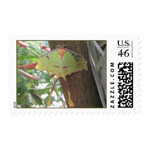 Luna Moth Stamp