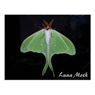 Luna Moth Postcard Postcards