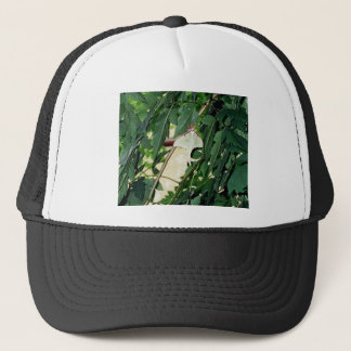 Luna Moth Trucker Hat