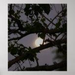 Luna ocultada impresiones