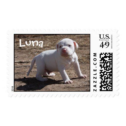 Luna, Saved Puppy Postage