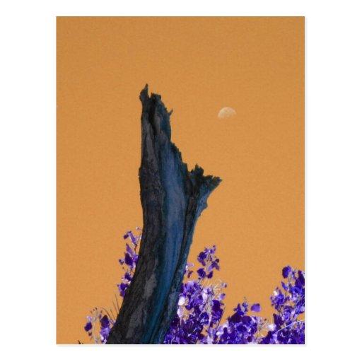 Luna sobre el árbol quemado Rising_singles Postal