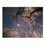 Luna sobre las flores de cerezo tarjeta postal