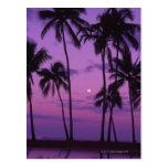 Luna y palmera postal