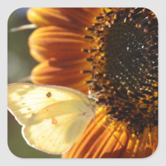 Lunar Moth Sun Landing Square Sticker