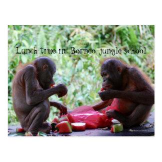 Lunch Time in Borneo Jungle School for Orangutans Postcard
