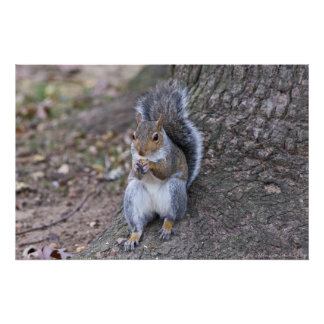 """""""Lunch with a Friend"""" Female Squirrel Poster"""