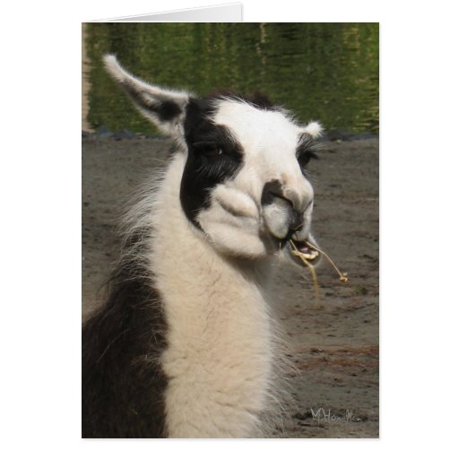 Lunching Llama Note Cards