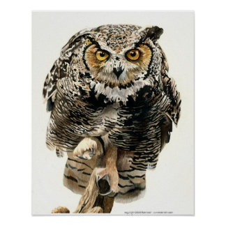 Lunchtime - Great Horned Owl Poster