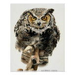 Lunchtime - Great Horned Owl Posters