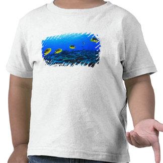 Lunula de Chaetodon de los Butterflyfish del Racoo Camiseta