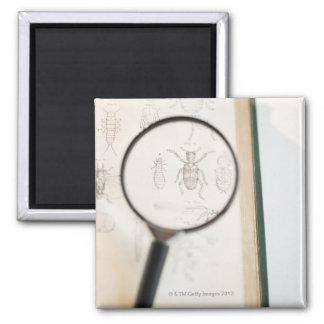 Lupa sobre el libro que muestra insectos imán cuadrado