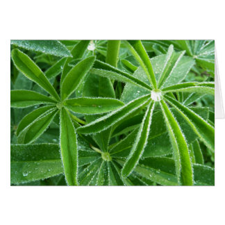 Lupin Leaves Green Nature Card