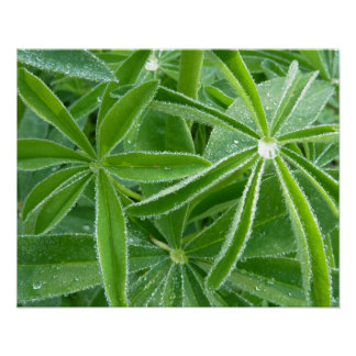 Lupin Leaves Green Nature Poster