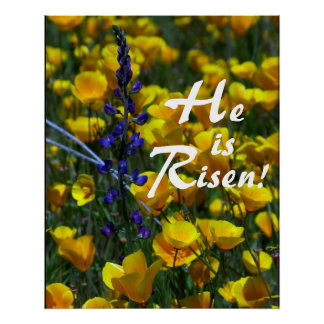 Lupin Poppies He is Risen Print
