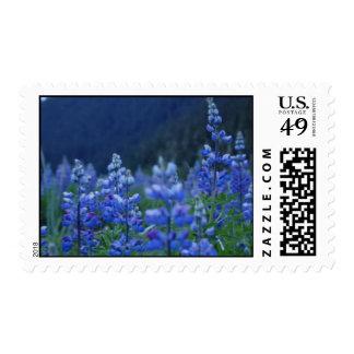 Lupin stamp