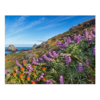 Lupine And Paintbrush Wildflowers Postcard