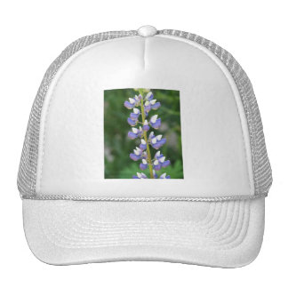 Lupine Baseball Hat