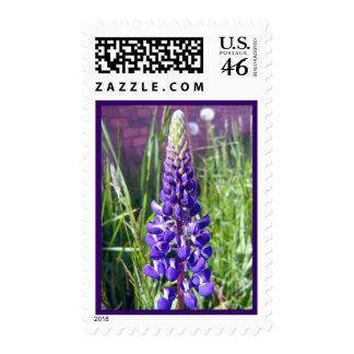 Lupine blanco y púrpura 1 sello