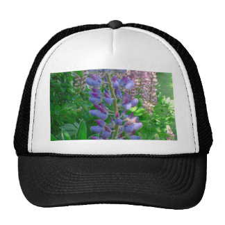 Lupine Blue Hats