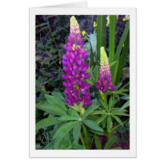 Lupine en el jardín perenne tarjeta