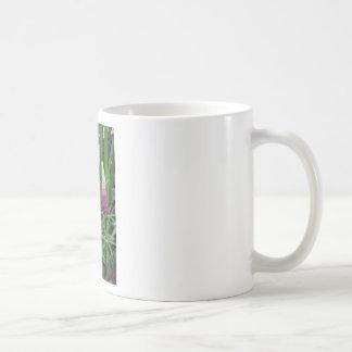 Lupine en el jardín perenne taza de café
