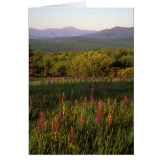 Lupine Field and Presidential Range Card
