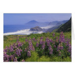 Lupine flowers and rugged coastline along greeting card